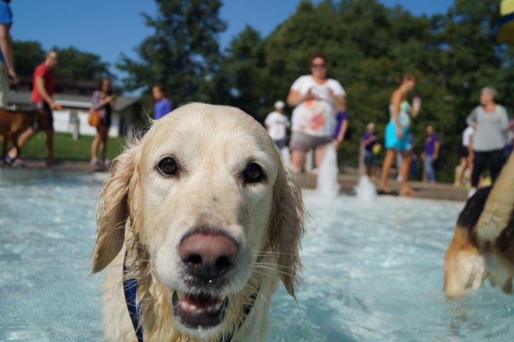Dog swims at Family Aquatic Center during Doggy Dip event